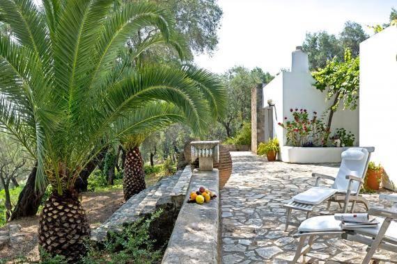 Boukari Olive Grove